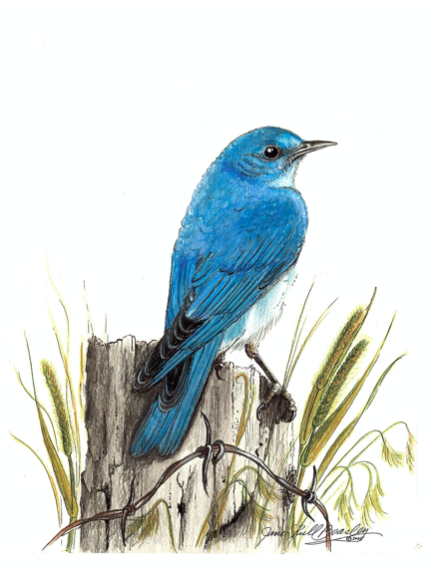 Where to place your bluebird house