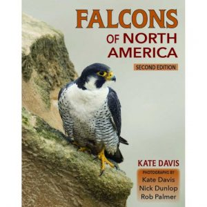 cover of the book, Falcons of North America